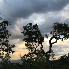 Trees of Pai